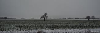Schnee Acker Lieblingsbaum
