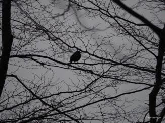 Schwarzer Vogel im Geäst