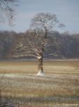 Baum mit Schnee in den Ästen