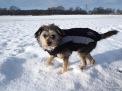 Der Schnee reicht schon bis leicht über das Knie