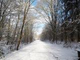 Wanderweg im winterlichen Ambiente mit Sonnenschein
