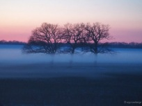 Drei Bäume im Nebel bei Sonnenuntergang auf Acker