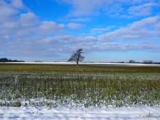 Einzelner Baum auf großem Feld Schnee