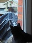 Amsel und Katze beobachten sich