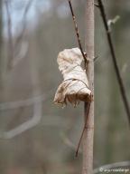 Getrocknetes Blatt aufgefangen an Zweig