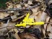 Gelbe Lohblüte Hexenbutter fuligo septica myxomyceten
