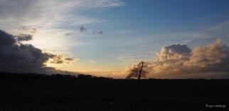 Cumuluswolken Baum auf Acker