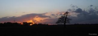 Baum auf Feld beim Sonnenuntergang