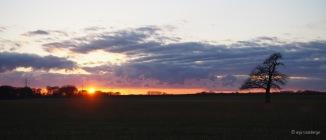 Baum auf Acker beim Sonnenuntergang