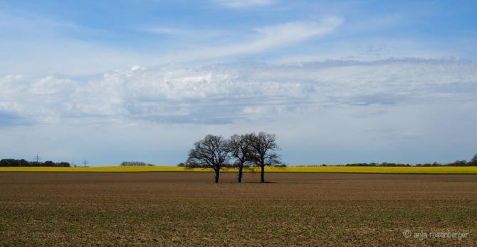 3 Bäume auf Acker