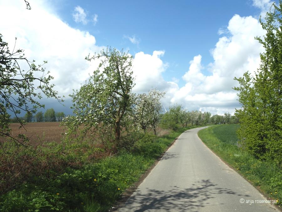 Straße mit Apfelbäumen