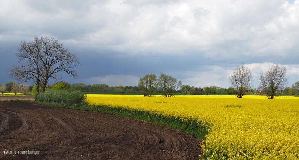 Norddeutsche Landschaft mit Raps