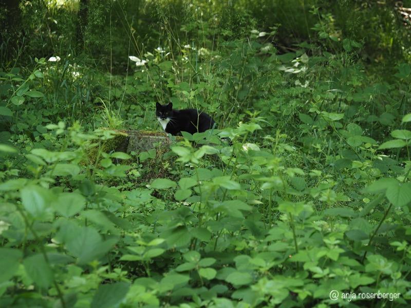 Schwarze Katze auf Stubben