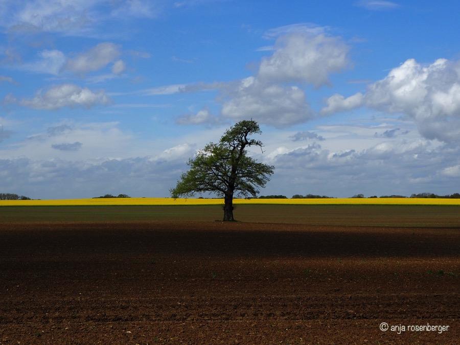 Baum auf Acker