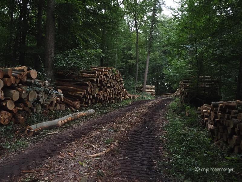 Frische Polter im Wald